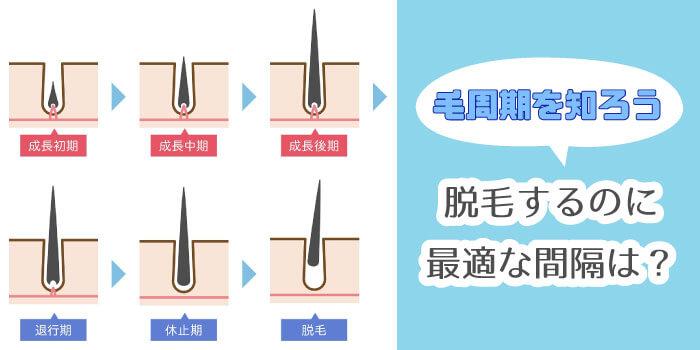 【知って得する脱毛知識】毛周期を理解して脱毛を効果的に!